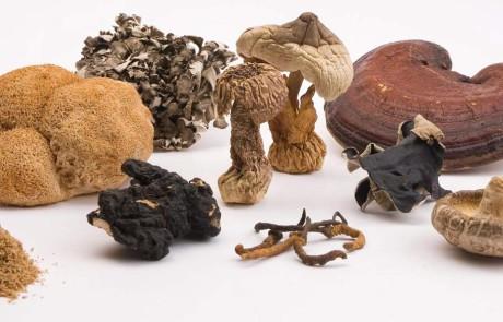 MICOTERAPIA FUNCIONAL: los beneficios de los hongos.